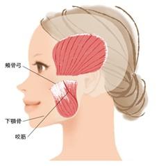 顎関節症の自分でできる簡単セルフケア!江東区北砂(大島)のマッサージ整骨院